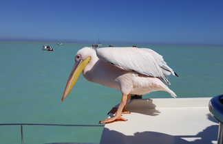 Pélican sur un bateau dans la baie de Swakopmund