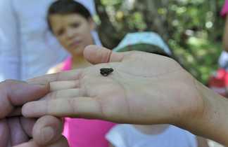 Petite grenouille dans la main d'un enfant en Croatie