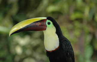 voyage découverte, toucan, Costa Rica