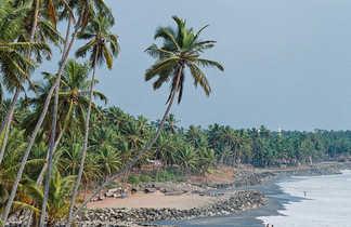 Plage du Kerala bordée de cocotiers
