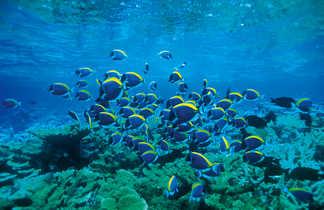 plongée sous marine Aqaba