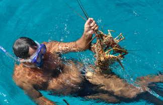 Plongeurs  tenant une langouste dans l'eau près de Cayo Santa Maria à Cuba