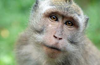 Portrait de singe, les yeux dans les yeux