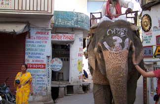 Rajasthani sur son éléphant dans les rues d'Udaipur, Rajasthan