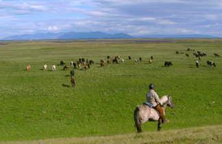 Randonnée à cheval en Islande