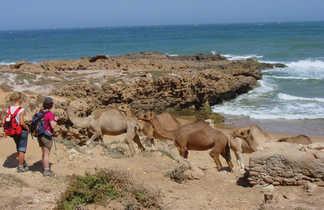 Randonnée chamelière famille côte atlantique, Maroc