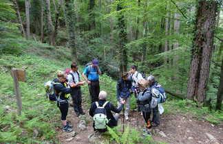 Randonnée dans la forêt de Vizzavona