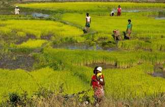 Randonnée dans les rizières d'Antsirabe