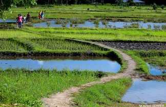Randonnée dans les rizières de Casamance au Sénégal