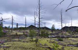 Randonnée dans une forêt pétrifiée au Kamchatka