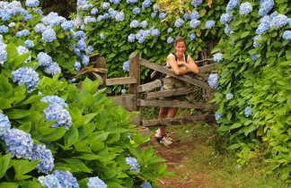 Randonnée parmi les hortensias aux Açores