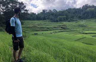 Randonneur face aux rizières, Pays toraja, Sulawesi, Indonésie