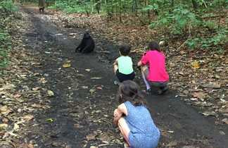 Rencontre avec des singes dans le parc de Tangkoko en Indonésie
