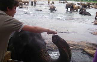 rencontre-avec-les-éléphants-dans-la-rivière-Oya-à-Pinnawela-Sri-Lanka