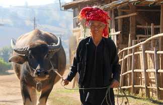 Rencontre avec une habitante du pays Shan et sa vache , Birmanie