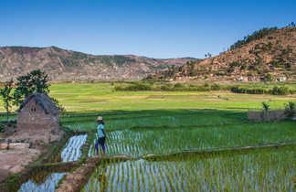 Rizière à Manandona dans les hautes terres