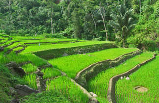 Rizières à Bali, Indonésie