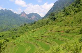 Rizières du nord Vietnam