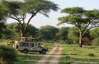 Safari dans la Parc du Tarangire