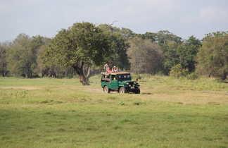Safari dans le parc national de Minneriya, Sri Lanka