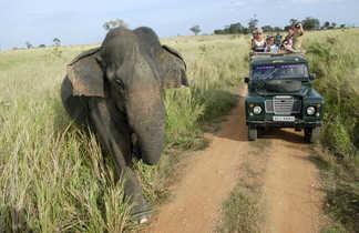 Safari-en-jeep-dans-le-Parc-d'Udawalawe