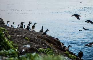 Safari oiseaux en Norvège