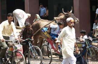 Scène de rue à Old Delhi
