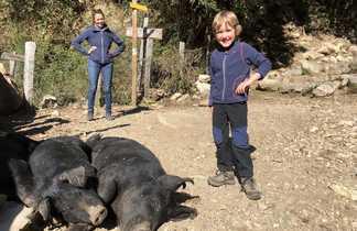 famille - cochon - corse