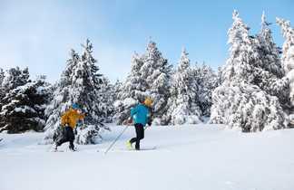 Ski de fond dans les forêts enneigées de la Laponie finlandaise