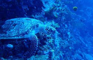 Snorkeling à Bunaken, Sulawesi, Indonésie