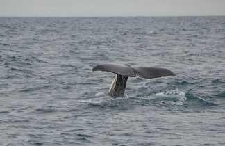 Sortie observation des baleines en Norvège