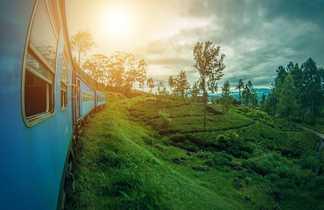 Train au milieu des champs de thé