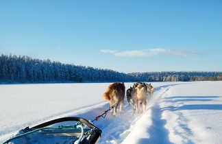 Chien de traîneau en Finlande l'hiver