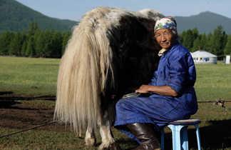 Traite de yacks dans l'Orkhon