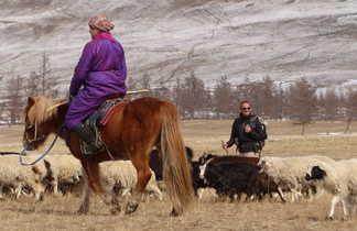 Transhumance des chèvres, moutons et yaks avec le peuple Darkhad