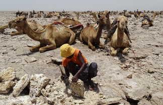 Travailleur de Sel dans la région du Dallol en Ethiopie