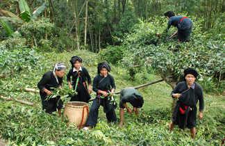trek vietnam voyage Vietnam nord vietnam Tonkin