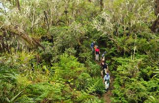Trek Dans la forêt de Bois de couleurs à Salazie, la Réunion