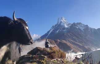 Trek des Annapurnas :  vue sur le Machapuchare