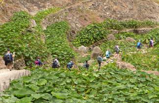 Trekking à Santo Antao dans les terrasses et cultures d'Igname