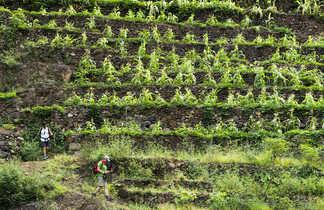 Trekking dans les terrasses de Santo Antao , et sa montagne façonnée