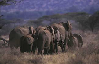 Troupeau d'éléphants dans la savane