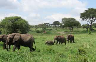 Troupeau d'éléphants dans le parc de Tarangire
