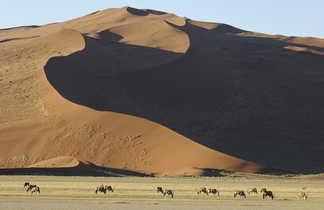 Troupeaux d'Oryx devant les immenses dunes du désert du Namib