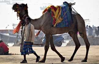 Un chameau au désert de Thar