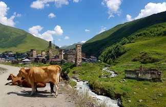 Vaches devant le village d'Ushguli