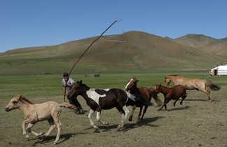 vallée de l'Orkhon, corral et prise à l'ourga