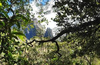 végétation forêt à Cilaos, la Réunion