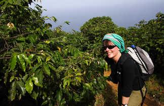 Végétation luxuriante du Cap Vert