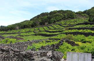 Vignobles de Pico, Açores